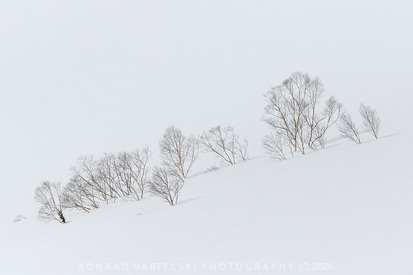 The Tree Tops