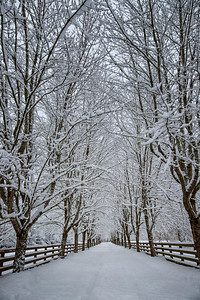 Snowy Driveway Portrait 2-4-19 Rockwood Farm