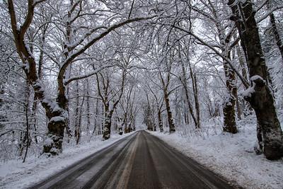 Reinig Rd Sycamores Tonal Contrast Snowy Day 2-4-19