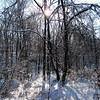 Frosty snow scape