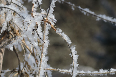 snow crystals on a vine