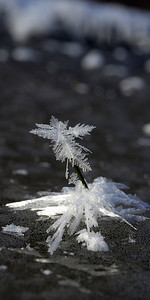 Miniature Ice Crystal Palm Tree