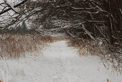 a winter path