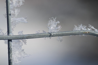 Ice / snowflake crystals on the garden fence