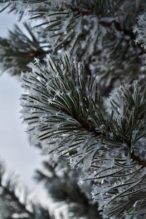 Winter Still