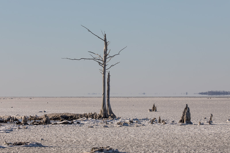 Wintry scene of frozen Alligator River after windchill temps of minus 1 this morning