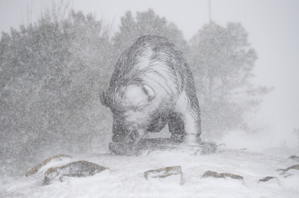 . LONGMONT, CO - MARCH 13: The buffalo sculpture at Colo. 119 and Weld County Road 3.5 during the blizzard March 13, 2019. To view more photos visit timescall.com. (Photo by Lewis Geyer/Staff Photographer)