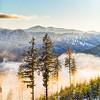 Snowy Treelines