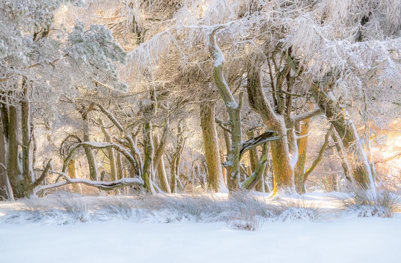 Brown EdgeWoods, winter