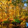 The River Dove, Autumn