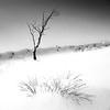 Brown Edge winter