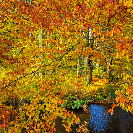 Autumn explodes..