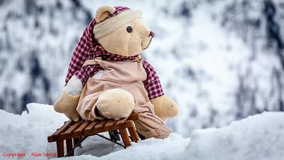 Snow Teddy