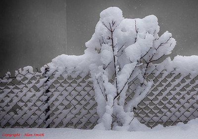 Snowing in Chamonix