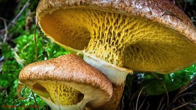 Mushroom Architecture