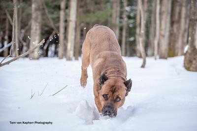 Tom von Kapherr Photography-7162