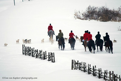 Winter Horse Collection 2017 Horses in the snow collection