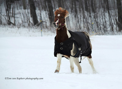 Winter Horse Collection 2017