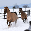 Horses by Tom von Kapherr Photography Two horses enjoying the winter snow