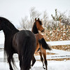Winter Horse Collection 2017 Playing in the Snow Logan & Milady
