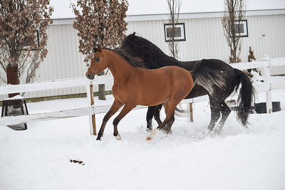 Playing in the Snow Logan & Milady