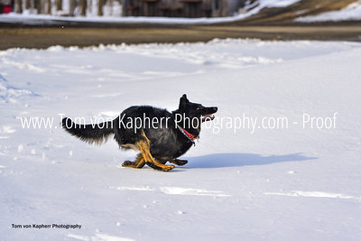 Tom von Kapherr Photography-0332
