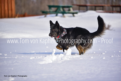 Tom von Kapherr Photography-0300