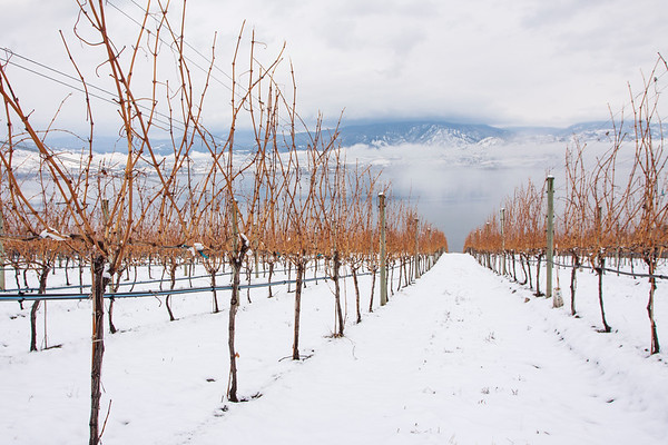 Winter in BC Wine Country