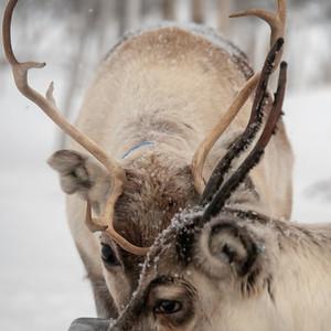 Winter in Swedish Lapland