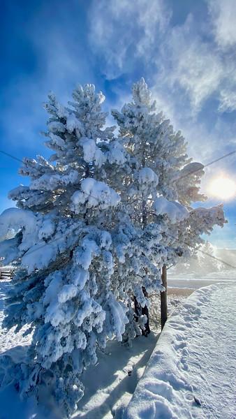 Snowy Tree with sun
