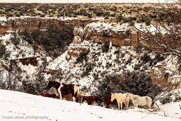 winter in the Texas Panhandle