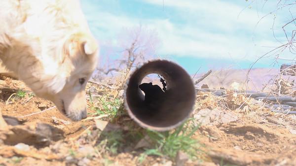 Pipe dreams - rock squirrel and nemesis