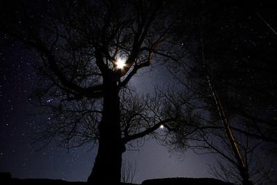 Venus, Moon, and Elm