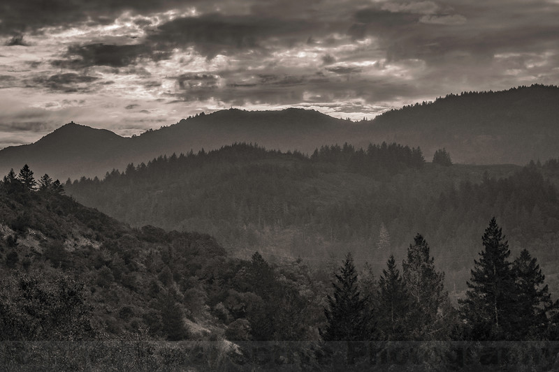 Mount Tam from Liberty Gulch: Black and White