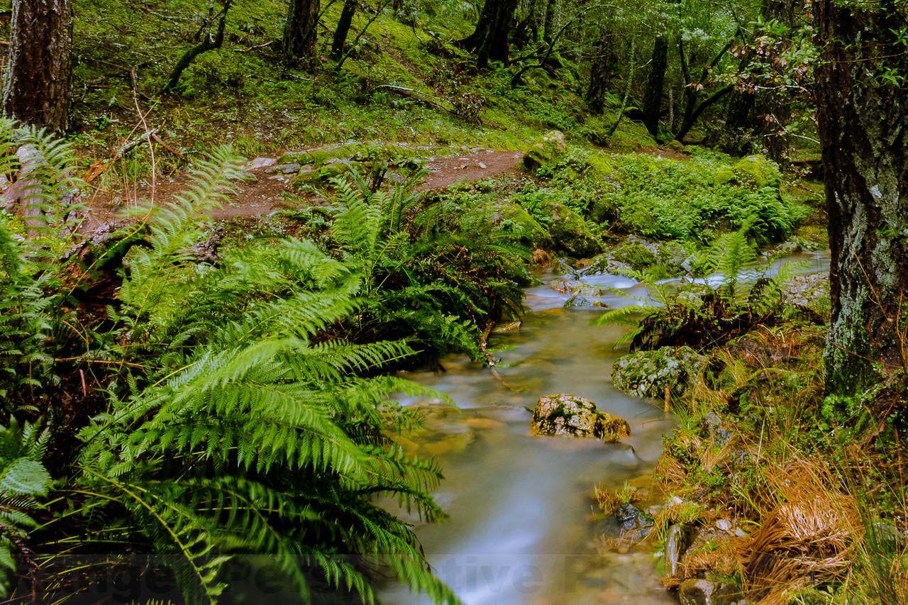 Along upper Cataract Creek