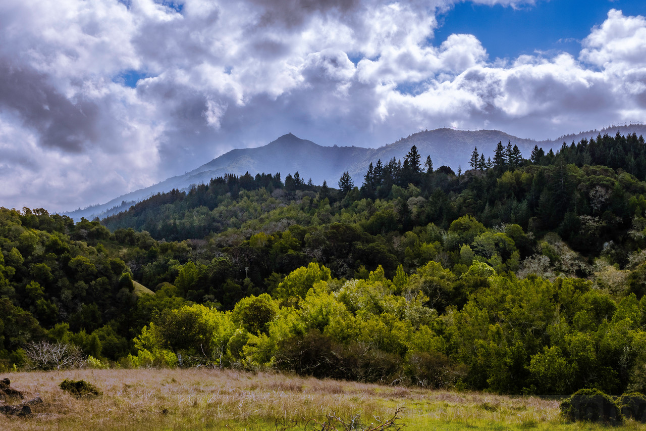 Lifting Clouds over Mount Tam