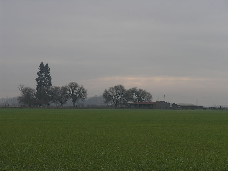 This a field with the winter crop making a green carpet looking toward a dairy ranch. The fog was still down and creates an ethereal look to the scene.
