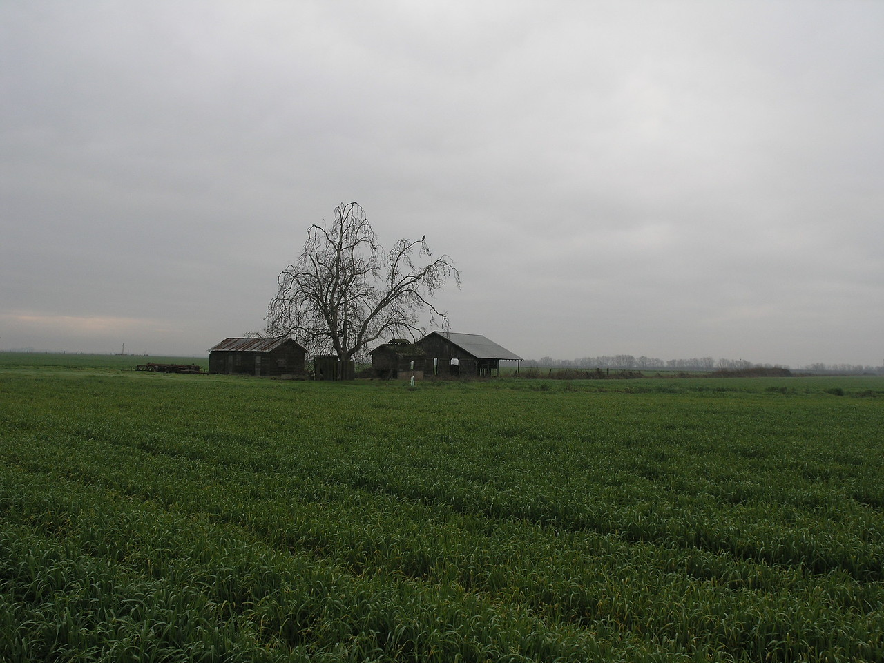 I decided to take a foggy Saturday and go take pictures. This barn and oak was just East of Modesto.