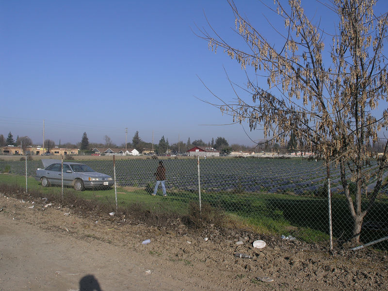 In the beginning they were open fields. i guess there was too much midnight strawberry picking so fences became the norm.
