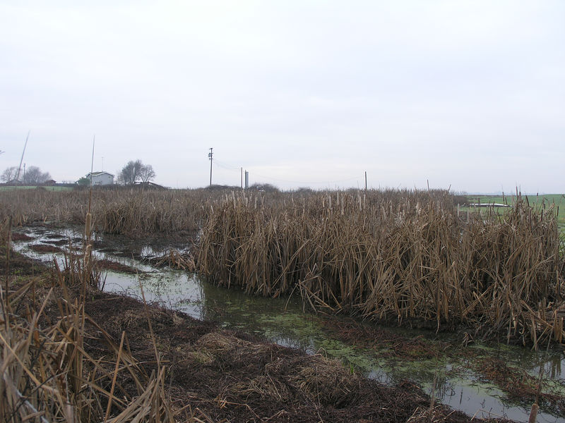 Most of the dairy country near Modesto tends to be on shallow ground with a lot of low spots that turn into tule marshes in the winter.  This is a common scene in the winter here.