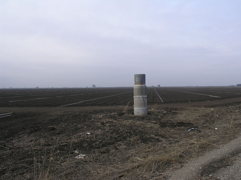 Alfalfa field with irrigation lines set out.  The stand pipe is to hold the water head when using irrigation.