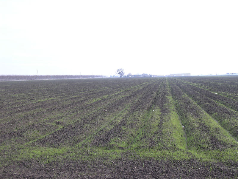 An alfalfa field in the dairy area.