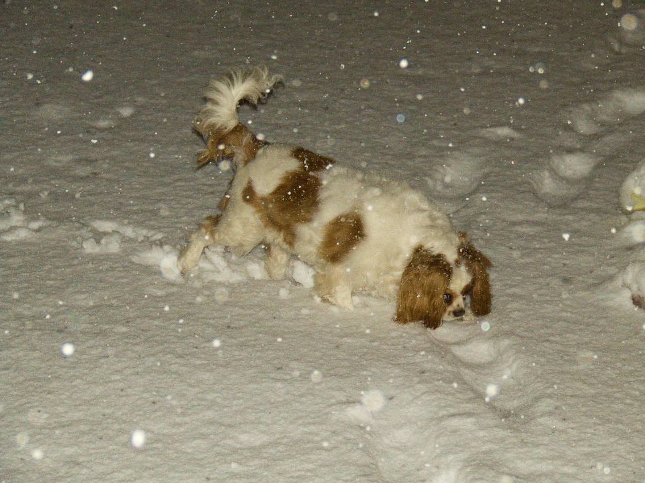Any excuse to get out in the snow