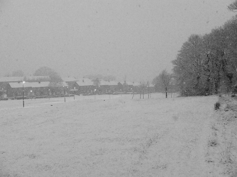 Bluebell Woods and Spruce Avenue in heavy snow