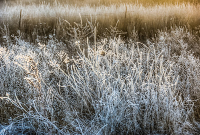 frozen-winter-grasses-1-2