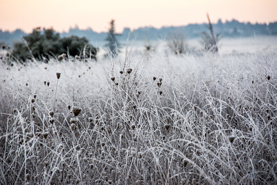 frozen-winter-grasses-1