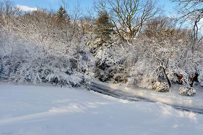 Snowstorm Jan 2011