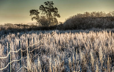 frosty-winter-field-4
