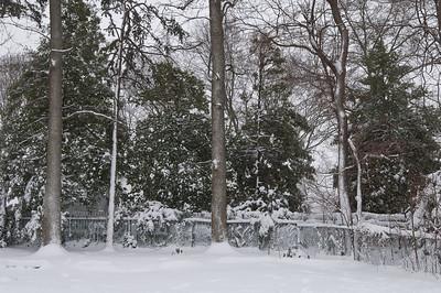 Backyard After the Big Snow Mar 2009