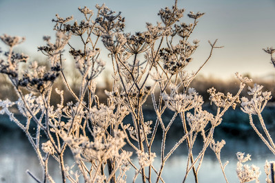 frosty-frozen-grasses-1